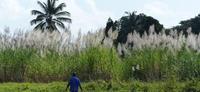 AgroBRC-RARe CRB Plantes Tropicales@Florilège